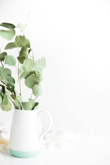 明るい色味の花器にさっと生けたユーカリは、このままドライにしていっても良さそうです。やわらかな朝の陽ざしを受けて輝く穏やかなグリーンが素敵です。
