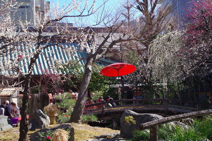毎年開催される梅まつりでは、野点や奉納演芸、物産展などが催され、大勢の人で賑わいます。