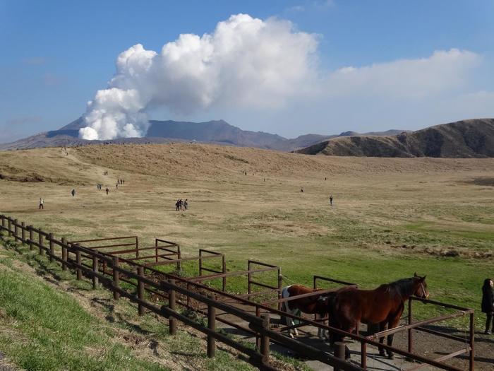 阿蘇に行くなら誰もが訪れるのが「草千里」。その名の通り見渡す限り続く草原に、雨水が溜まって池のようになった草千里ヶ浜、中岳から立ち上る噴煙。大自然を思い切り満喫できる名所です。牛や馬がのんびり過ごすのを眺めたり、乗馬を楽しんでも♪