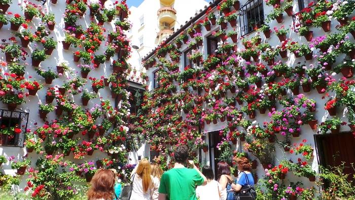コルドバで毎年5月に行われているのが、白い家の壁に色鮮やかな花々が飾られるパティオ祭り。パティオとは中庭という意味で、それぞれが中庭の美しさを披露するというのが、このお祭りです。時間がゆったりと流れているように感じられる穏やかなコルドバの町で、心が洗われるよう。