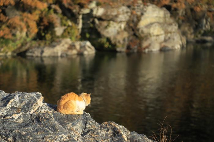 岩畳やライン下りで有名な長瀞渓谷。夏や秋はたくさんの人がキャンプにも訪れます。清らかな清流と穏やかな空気に心が癒されます。
