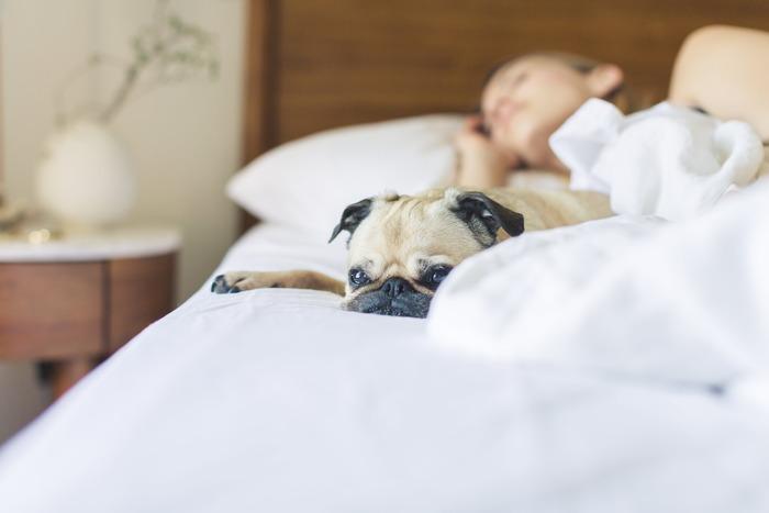 温かい湯船に浸かるとリラックス状態をもたらす副交感神経が活発に働き、冷たい水を浴びると交感神経が活発に。「交互浴」で自律神経を刺激すると身体のリズムが整うので、夜はぐっすり眠れるようになります。
