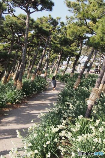 城ヶ島灯台は、城ヶ島ハイキングコースのほぼ終点にあたります。ハイキングコースは城ヶ島大橋の麓にある白秋碑をスタートし、城ヶ島公園や馬の背洞門などを巡ります。  島の東の端にある安房崎灯台から島の右端付近にある城ヶ島灯台までは、徒歩で約45分。ゆっくり歩いても2時間もあれば辿りつけるでしょう。晴れた日には、途中でお弁当を食べて、1日かけて城ヶ島を巡り、最後は城ヶ島灯台で夕日を眺める、なんていうコースもおすすめ!