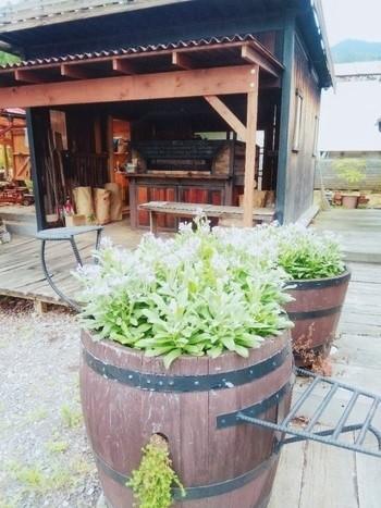 敷地内にはパンを焼くための薪窯が。