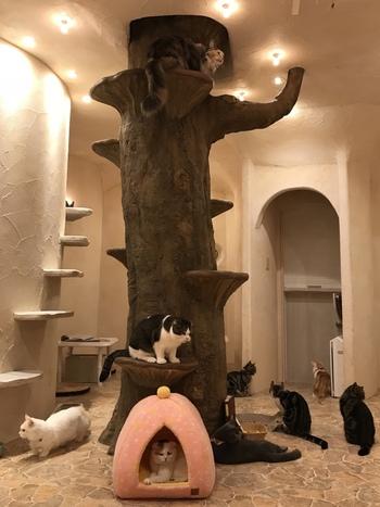 お城の中央には、猫たちが1階と2階を行き来できる大きな木が!