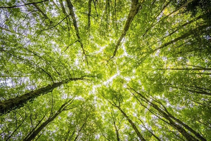 そんな玄関には、空気清浄効果のある森林系の香りがぴったり。ヒノキやパイン、サイプレスはリフレッシュ効果も期待できる香りで、心地良いと感じる人が多いのだそう。お出かけ前に明るい気分にもしてくれそうですね。
