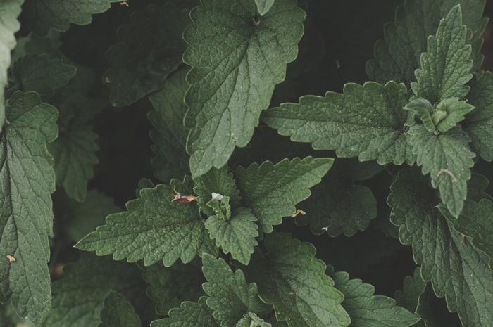 おすすめの香りは、ペパーミント、レモン、ローズマリー、ユーカリなど。ペパーミントは乗り物酔い解消、レモンはリフレッシュ効果、ローズマリーは記憶力アップ、ユーカリは風邪予防になるなど…それぞれの香りには、スッキリした気分にしてくれる以外にも、嬉しい特徴もあります。