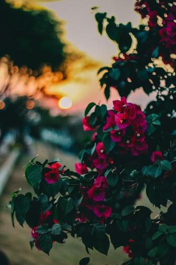 美しい花、広い空、肌に感じる風など、ありのままの自然を感じる時間も脳を休めるには効果的。マッサージとは違う形で五感に心地良さを与えられて、過度の考えすぎを止められます。