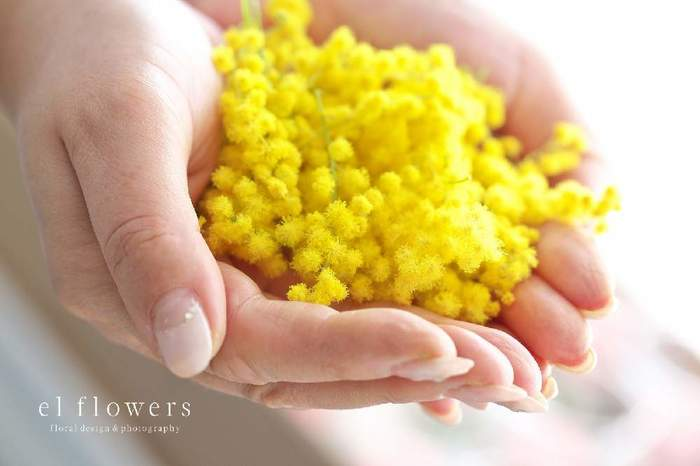 ミモザの花言葉は「友情」「優雅」「感謝」「真実の愛」など。プラスのイメージのものが多く、プレゼントとしても贈りやすい花です。