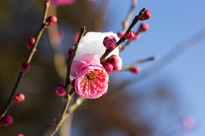 """【寒くないのに春らしい】我慢しない """"春めきコーデ"""" を叶える5つのお洒落テクニック"""