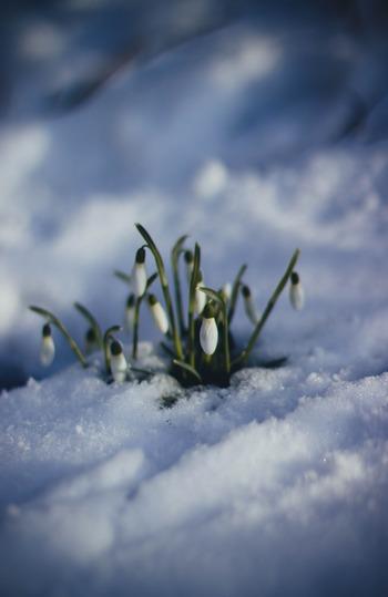 慌ただしい年始から少し落ち着く2月はまだまだ寒い日が続きますが、暦上で春の訪れを表す「立春」なんですよ。同時に2月の食材も春待ちを感じさせる少し苦味がある野菜たちが多く出回り始めます。
