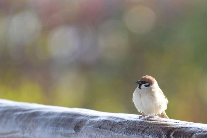幸せを呼ぶ…♪ほっこり可愛い【鳥モチーフ】のアイテム