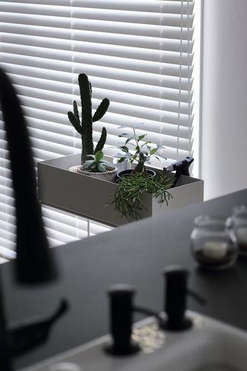 いつも目に入るところにグリーンがあると、心が穏やかに落ち着きます。お部屋の中でも育てられる観葉植物をチョイスして、のんびりと成長を楽しみましょう。