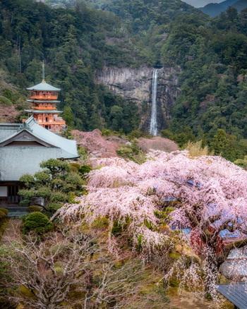 自然豊かな場所にあるので、季節のうつり変わりも見どころです。 春は桜、秋は紅葉と絵葉書のような景色に出合えます。