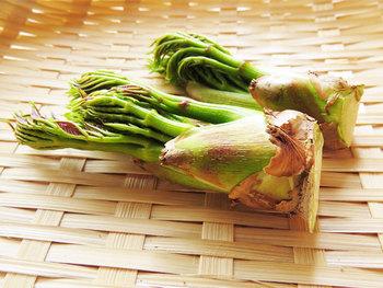 タラの芽は、ウコギ科のタラノキの新芽。ほのかな苦みともちっとした食感が特徴です。天ぷらなどの場合はそのまま使えますが、和え物などにはアク抜きを。根元のはかまをはずし、かたい部分の皮をむきます。そして、塩を加えたお湯で下ゆでし、冷水に放ちます。
