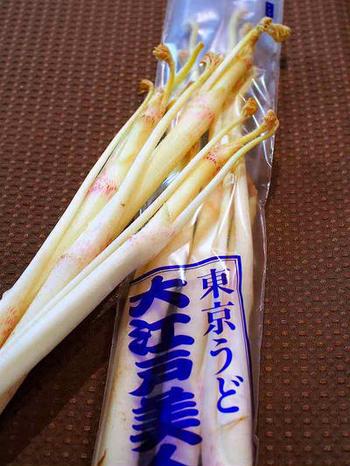 うど(独活)は、ウコギ科タラノキ属の多年草。タラノキ(木)に生えるタラの芽とは違って、草です。シャキシャキ感と独特の風味が特徴。生食の場合は、酢水にさらしてアク抜きをします。