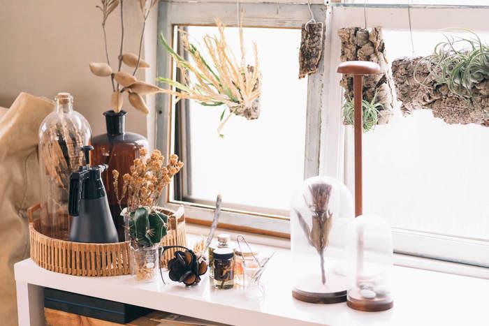 エアープランツや多肉系植物は、ナチュラルインテリアやアンティークなお部屋を、よりおしゃれに見せてくれるでしょう。 流木やドライフラワーなど、自然を感じられる素材といっしょに飾ると◎