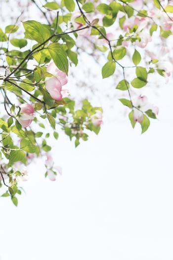 """植物やお花が好きな方へオススメの「GreenSnap(グリーンスナップ)」。お散歩途中に偶然出会ったお花や、誰かから貰ったお花の名前って気になりますよね。  そんな時はこの「GreenSnap」が大活躍。""""教えて!カメラ""""の機能が、植物の写真を撮るだけでその名前を教えてくれます。"""