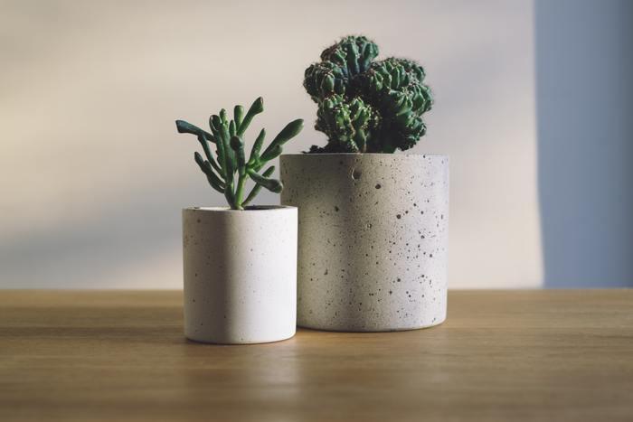 他にも、植物の育て方、アレンジレシピ、豊富な投稿写真が満載。植物の成長記録、花と緑のあるインテリアやDIYの参考にもぜひこのアプリを活用してみてくださいね。