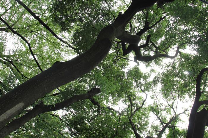 常緑シダ類のような湿生植物をはじめ、ケヤキ・コナラ・ヤマザクラなどの樹木が生い茂り、東京都の「名勝」に指定されています。