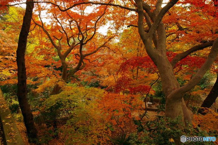 ケヤキやイチョウ、モミジなど、様々な樹木の美しい紅葉を楽しむことができます。秋になったらぜひご家族やお友達を誘って、紅葉狩りに出かけてみませんか?