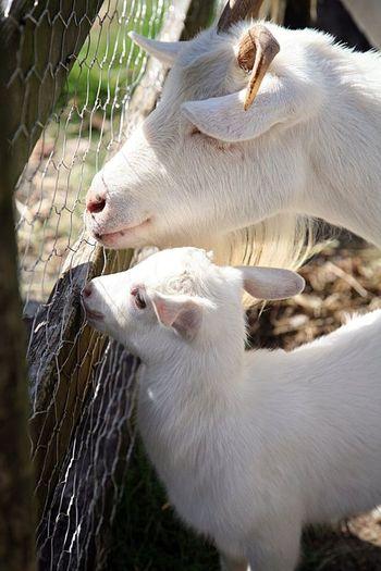 園内にはミニ動物もあり、ヒツジや馬、ウサギなどと触れ合うことができます。もしかしたら、動物たちの赤ちゃんと出会う体験ができるかも知れません。穏やかで愛らしい表情に癒されますよ◎
