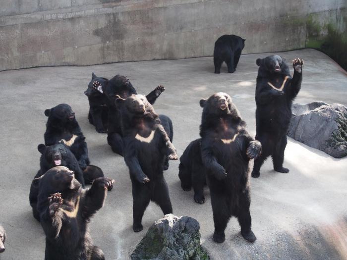 名物は、6種類約160頭のクマが暮らしている「ベアバレー」。「おやつちょうだい♪」と手招きしてアピールする姿は、愛嬌があってとってもユニーク!