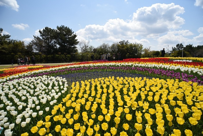 淡路夢舞台のお隣にあるのは、「国営明石海峡公園」。季節の花々が一面に広がる景色は圧巻!非日常の世界へと誘います。淡路夢舞台とセットで、のんびり散策するのもおすすめです。