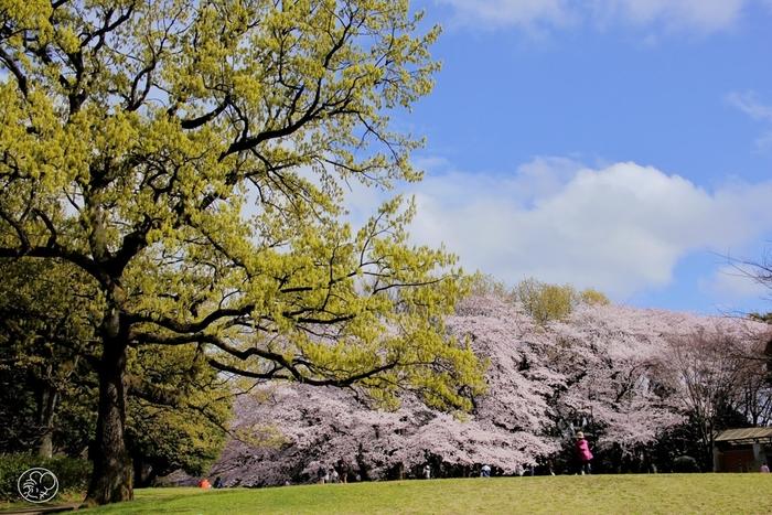 東急田園都市線・用賀駅から徒歩約20分の場所にある砧公園(きぬたこうえん)。広々とした園内には、思い切り駆け回れる芝生のエリアや、アスレチック、遊具がたくさんあります。小さなお子さんを連れて、思いきり遊ぶのにぴったりの公園ですね。春になると、お花見スポットとしてもにぎわいます。