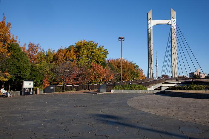 東京メトロ東西線・木場駅から徒歩約5分と、アクセスのよい木場公園。北側には東京都現代美術館があるので、アートを楽しんだあとに公園でゆっくりパンのお食事…なんて過ごし方も素敵ですね。公園のシンボル的存在である木場大橋の奥には、東京スカイツリーが見えますよ。