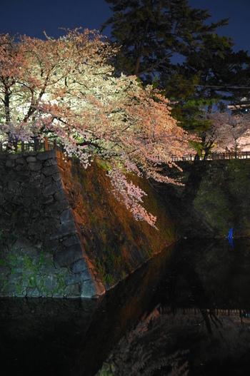 勝山公園・小倉城天守閣広場に3/22~4/7まで花見照明(雪洞)が設置されるので、ライトアップされた夜桜の神秘的な美しさを堪能してみませんか?