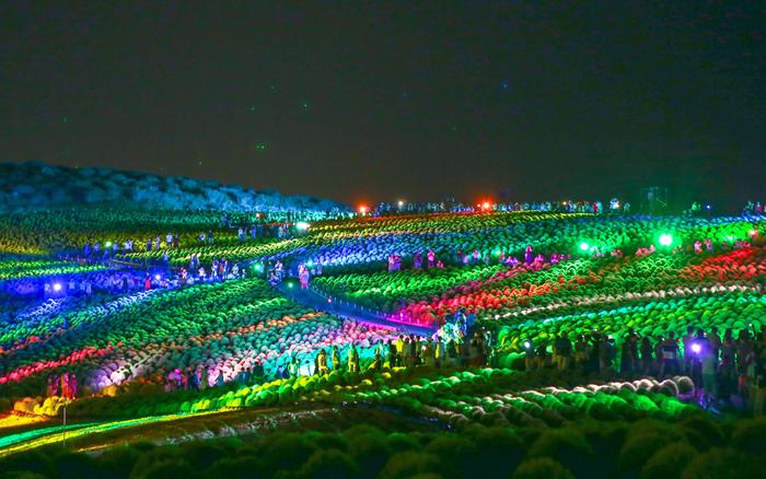 夏にはコキアのライトアップも開催されています。光と音の幻想的な雰囲気は、まるで夢の中にいるようなロマンチックな夜景が楽しめますよ。