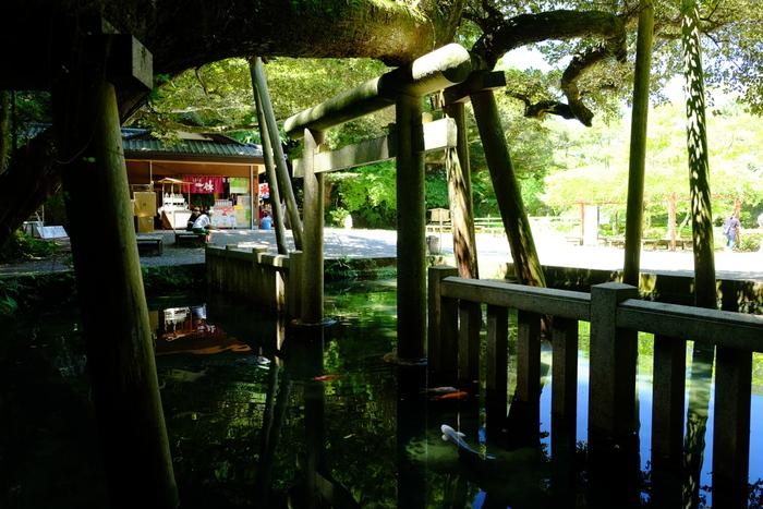 奥宮のさらに先にひっそりとたたずむ「御手洗池」は、1日に40万リットル以上もの湧水があり、水底が一面見渡せるほど澄みわたった池です。水面に鳥居が鏡のように映り、とても神秘的。