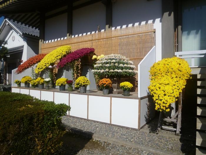 毎年10月下旬から11月下旬に開催されている「菊まつり」は、日本で最も古い菊の祭典といわれています。おまつりの期間中は、境内のあちこちに立ち菊や盆栽菊など、約8,000鉢の菊の花が展示されていて、その鮮やかな色合いと香りを楽しむことができます。