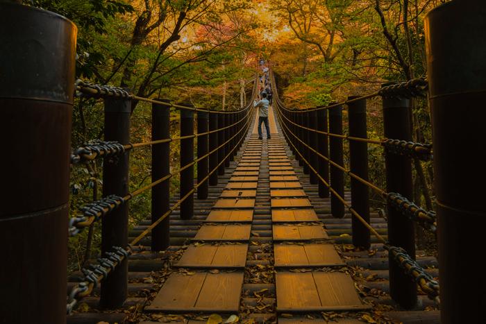 中でも人気なのが、紅葉の季節。渓谷にかかる約60mの吊り橋は、紅葉のトンネルのよう。橋が色付いて見えるほどの鮮やかさです。