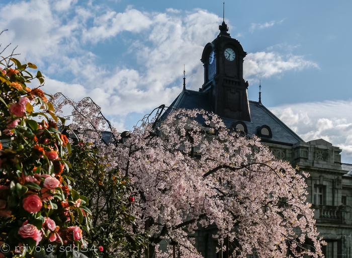 大正5年に建てられた、レンガ造りのレトロな佇まい。元々は県庁と県会議事堂だったものが現在は県郷土館として一般公開されています。タイムスリップした気分で桜を愛でてみるのもいいのでは?