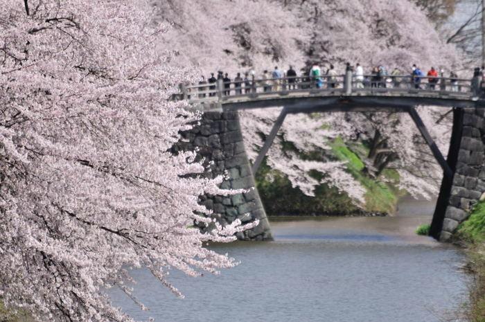 山形の桜の見ごろは4月中旬~下旬。都内の桜が終わったあと、桜前線と一緒に山形まで北上してみるのも素敵です。霞城公園には約1,500本の桜の木があり、一斉に咲き誇る姿は圧巻の美しさ。シーズン中はライトアップされ、夜桜見物も楽しめます。