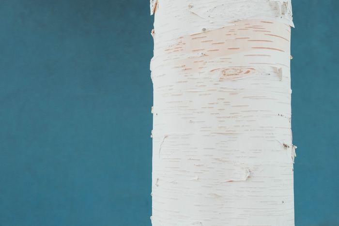 「Valona Design(ヴァロナ・デザイン)」は、フィンランドを代表する素材の白樺を使ったアクセサリーが素敵な現地のアクセサリーブランド。アクセサリーだけでなく、インテリア小物なども取り扱っています。自然をイメージした繊細で素朴なアクセサリーは、プレゼントにもおすすめです。