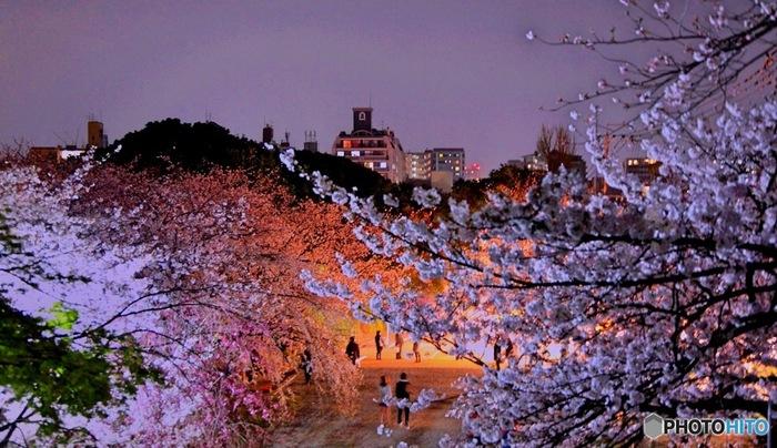 西公園には光雲神社があり、夜になると神社の階段がライトアップされます。階段を上ると美しい夜桜を愛でることができますよ。西公園は3月下旬~4月上旬が見頃で、桜のシーズン中は多くの屋台も立ち並びます。美味しい屋台グルメを食べながら、桜の美しさに酔いしれましょう!