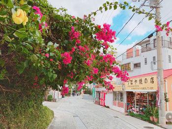 もっと便利な場所を求めるなら、やちむんのお店が並ぶ「壺屋のやちむん通り」もオススメです。  観光でも有名な、那覇の「国際通り」からすぐの場所。アクセスは便利ながらも、300年以上前から焼き物を作り続けてきたエリアなので、昔ながらの街並みを歩くのも楽しみ。
