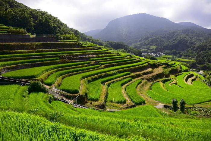 棚田百景の一つとして選ばれている「中山千枚田」。750枚以上の棚田があり、段々になった緑がどこまでも続くさまは見事です。