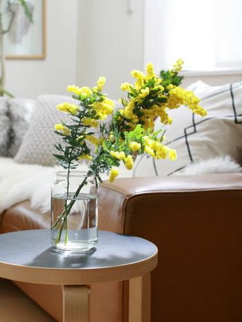 イエローの小さなお花が愛くるしいミモザ。春になったら、いち早くお部屋に飾って春を感じたいお花です。パッと華やかなそのビジュアルは、シンプルな瓶に活けるほどに絵になります。