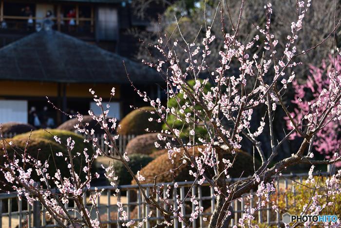 【茨城】自然や歴史etc見所いっぱい!大人も子供も楽しめる「観光スポット」ガイド