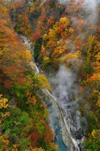 宮城県との県境にある「小安峡(おやすきょう)」は、特に秋の紅葉シーズンに訪れたい名所です。皆瀬川の急流が、長い年月をかけて両岸を深く浸食してできたV字の谷で、その深さは約60m。橋から見下ろすと、モクモクと湯気が立ち上っているのが見えます。