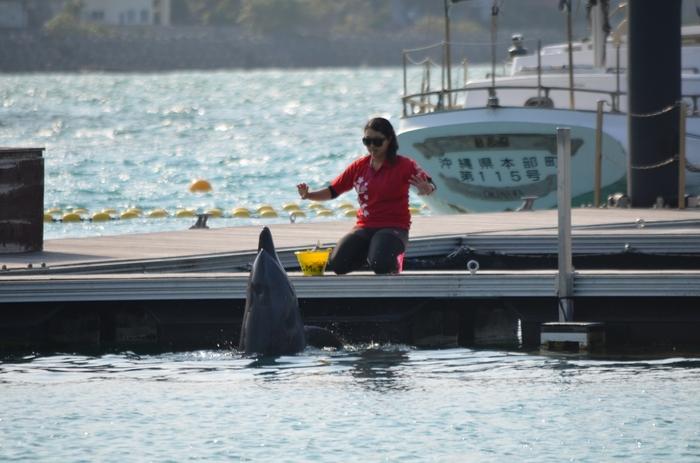 「もとぶ元気村」のドルフィンプログラムは、広い海に行かなくてもイルカと戯れることができるのが魅力。  陸の上からイルカと触れ合える30分程度のものから、イルカと一緒に泳げる1時間前後のものまで・・プログラムの種類が充実していて、小さいお子さんから大人まで満足できますよ。