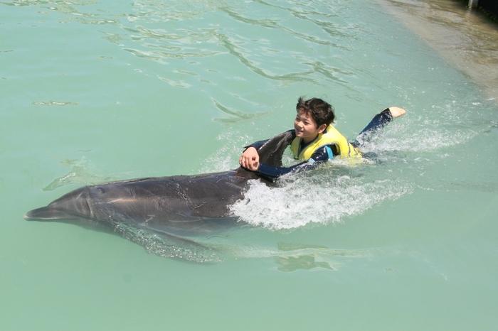 限られた時間の中でイルカと戯れたい、一応泳げるけれど海は不安・・・という方にもピッタリのプログラムがみつかります。