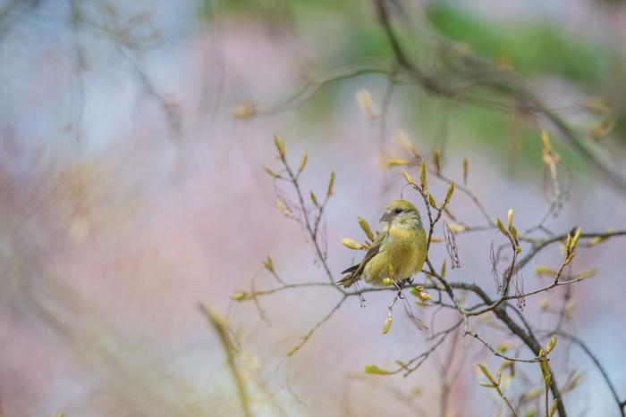 古来より日本人に愛されてきた伝統色。四季を映す鏡とも言える和の色は日本人の生活に深く関わってきました。そんな日本の伝統色は、私たちのまわりに溢れています。この季節にしか出合えない色に気づいて、春の訪れを楽しんでくださいね。