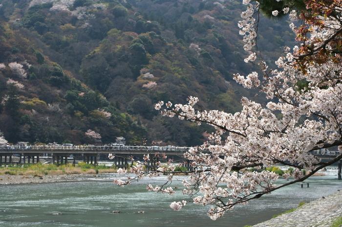 京都の中でも屈指の観光スポットである「嵐山の渡月橋」。桂川沿いの満開の桜と渡月橋、嵐山の豊かな自然と山々が素晴らしい和音を奏でています。ここでしか味わうことのできない風光明媚な景色は、京都に訪れたなら一度は見ておきたい名所となっています。