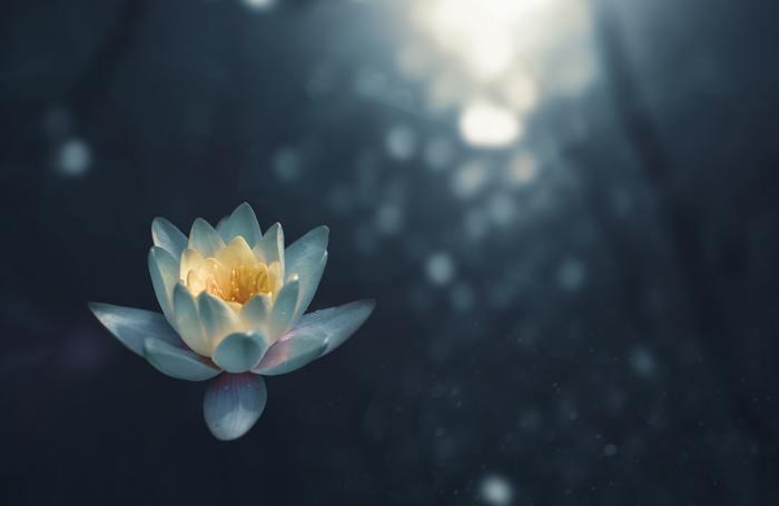 メディテーションによってアレコレ考えてしまうのを一時的に止めることができます。またそれを繰り返し行うと集中力が高まり、心を静めて感情をコントロールしやすくなります。ヨガをしている間は「あなたがあなたであること」を心地良く感じ、周りを気にしすぎたりストレスをためたりすることも減っていくはず。