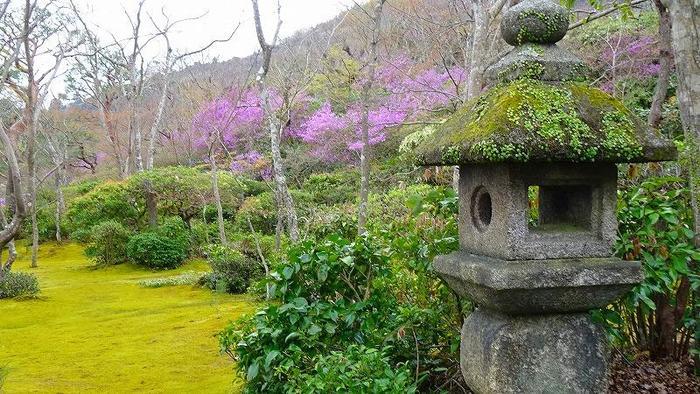 昭和初期に活躍されていた映画俳優・時代劇役者の、大河内傳次郎氏が別荘として造園された回遊式庭園「大河内山荘」。広い園内には、登録有形文化財の建造物や市内を一望できるスポットもあり、桜以外にも楽しめるポイントがたくさんあります。少し高低差があるので、歩きやすい靴で訪れるのがおすすめです。